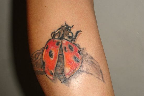 Attractive Lady Bug Tattoo Design