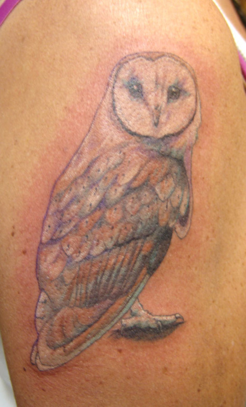 Barn Owl Tattoo On Biceps