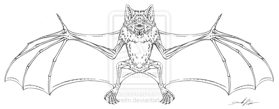 Vampire Bat Tattoo Design