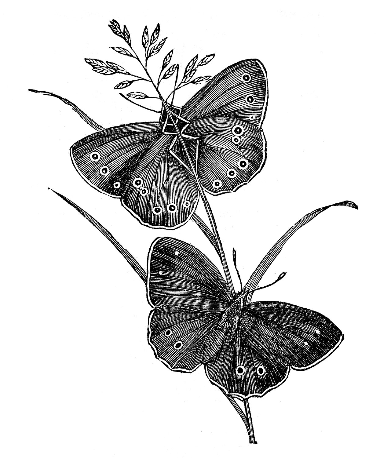 Butterfly Pair Tattoo Design