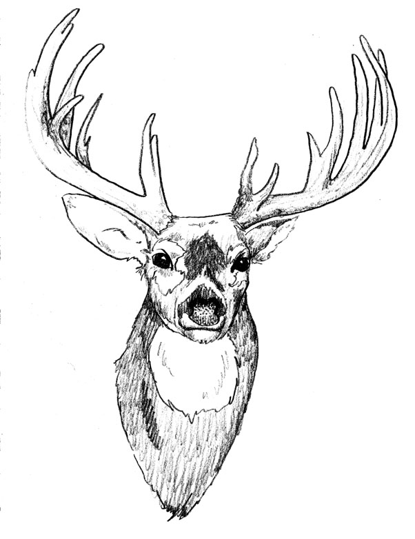 Deer Head Skull Drawing