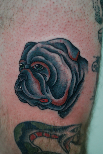Bull Dog Face Portrait Tattoo Design