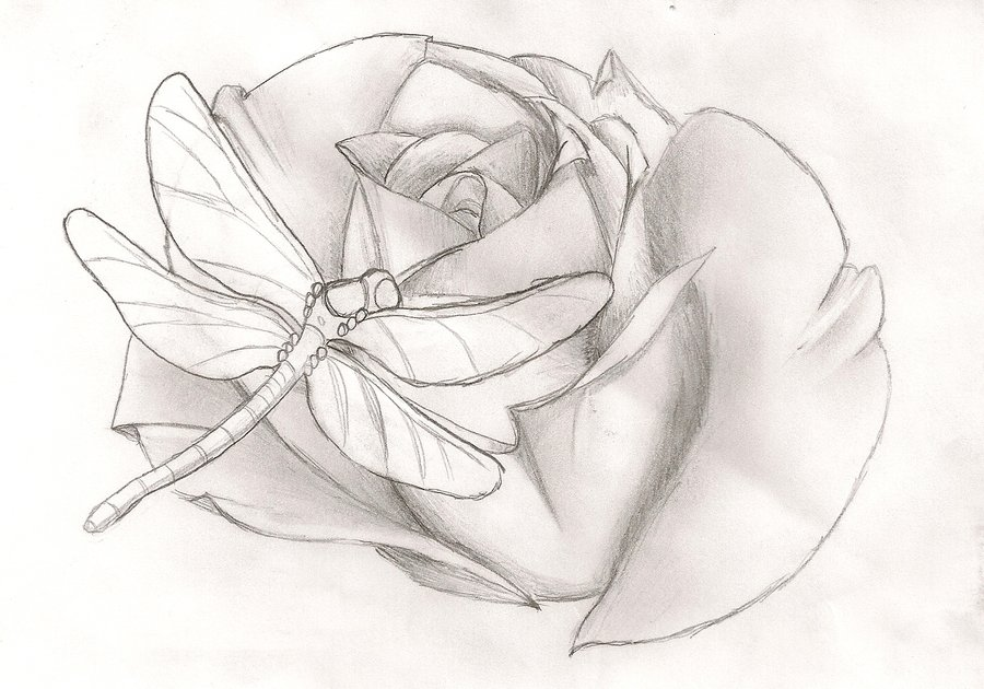 Dragonfly n Rose Tattoo Drawing