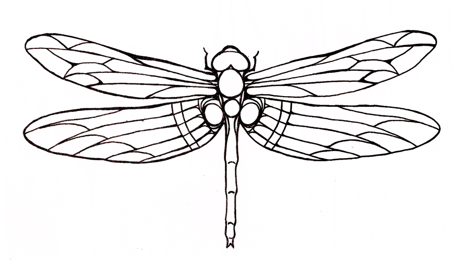 Dragonfly Tattoo Sample