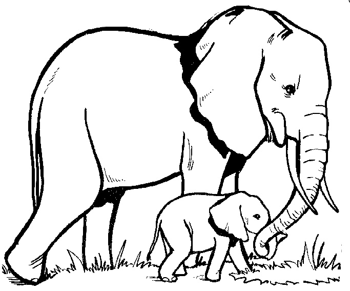 Elephant Tattoos Designs And Ideas Page 38