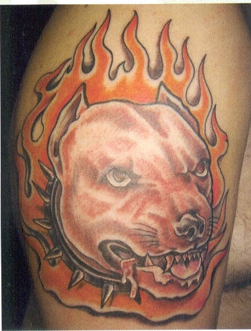 Dog Fire n Flame Tattoo On Biceps