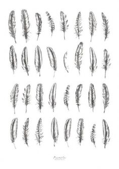 Lots Of Feather Tattoo Designs