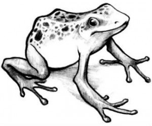 A Frog Tattoo Sketch