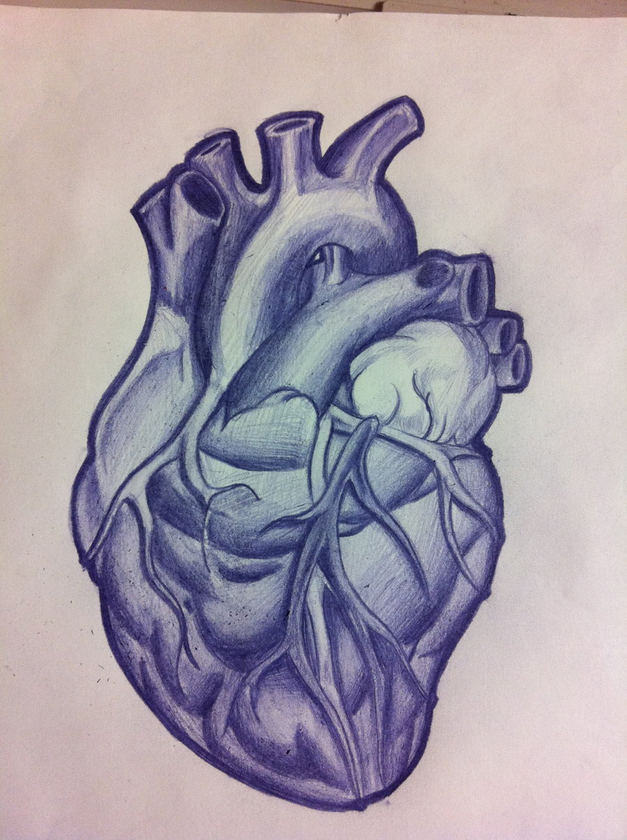 Anatomical Heart Tattoo Design