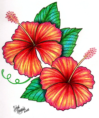 Hibiscus Flower Tattoo Outline Images amp Pictures Becuo