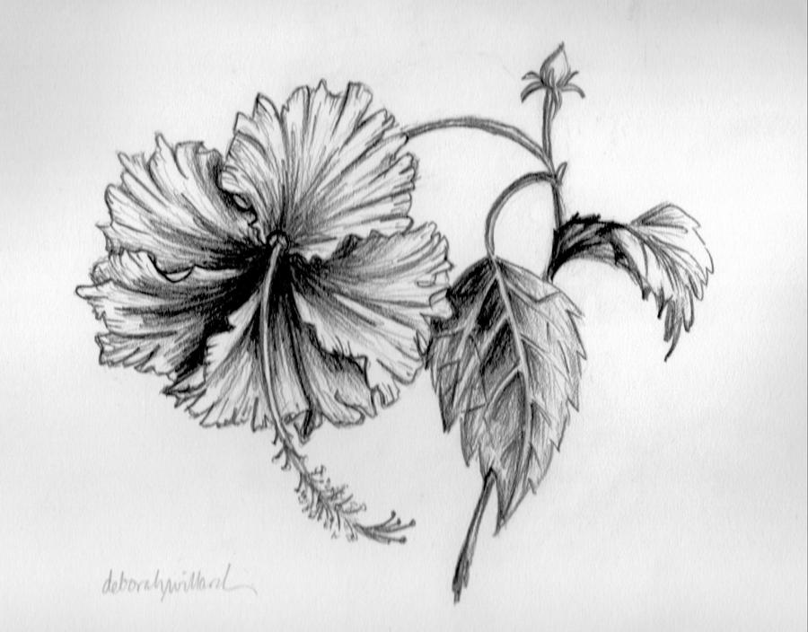 Hibiscus Tattoo Drawing Tattoobitecom