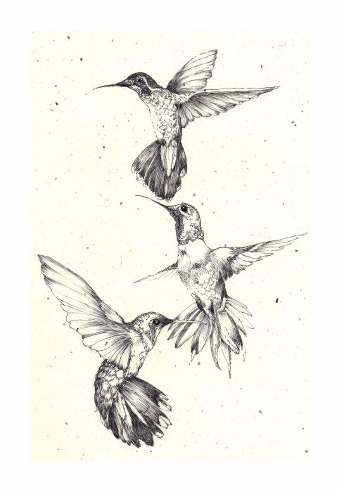 3 Hummingbirds Tattoo Design