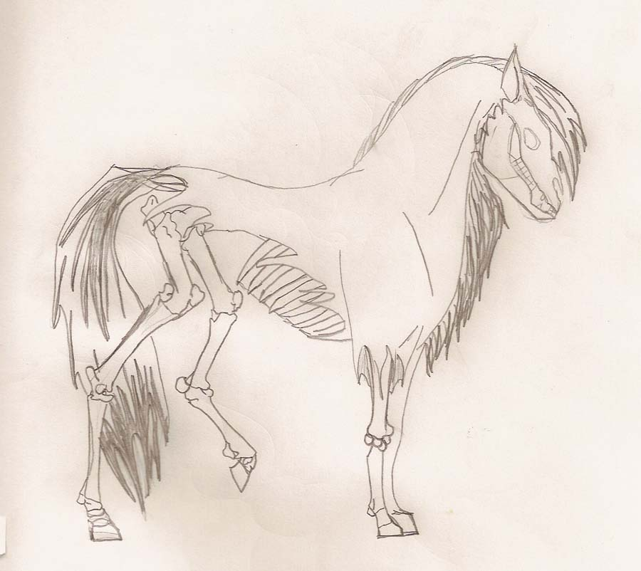 Skeletal Horse Tattoo Concept