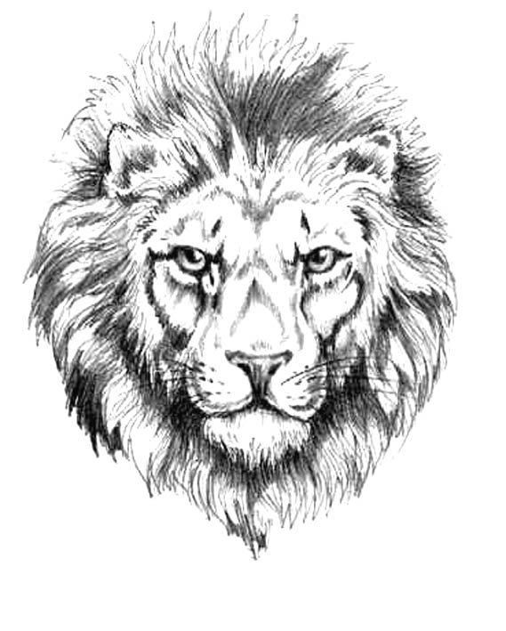 Lion tattoos designs and ideas page 96