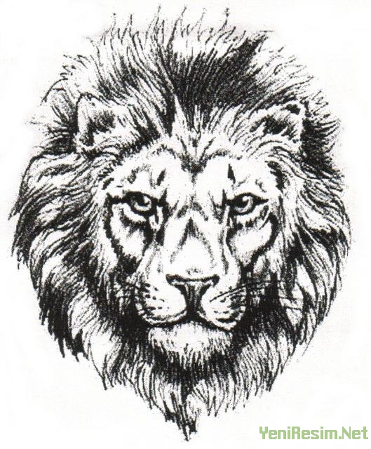 One More Lion Head Tattoo Design
