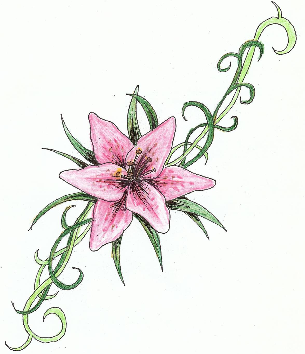 Flower meanings lily - Pink Lily Vine Tattoo Design