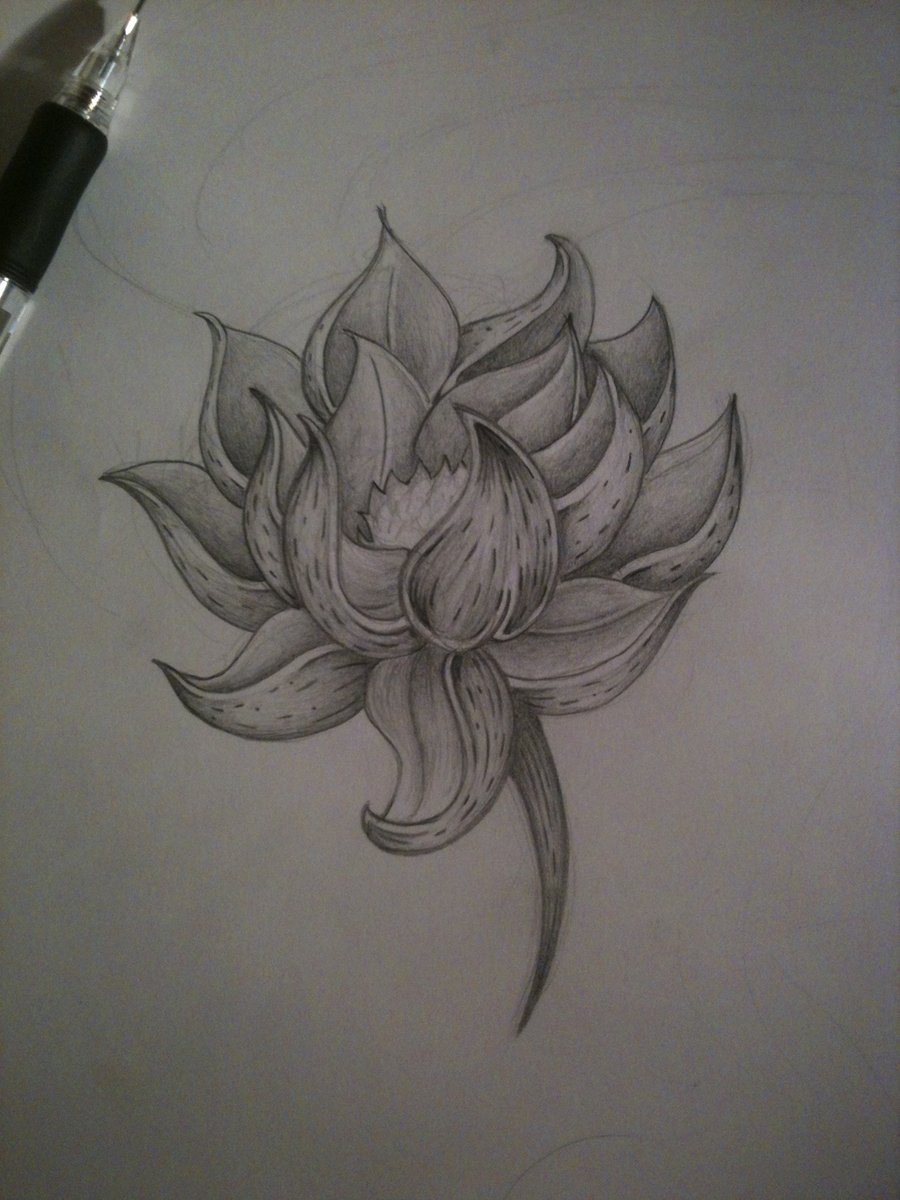 Lotus Flower Pencil Sketch