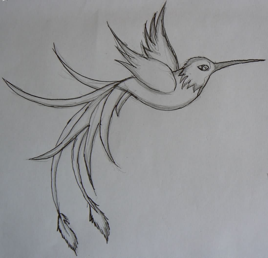 Humming Bird Tattoo Sketch