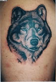 The Wild Wolf Tattoo
