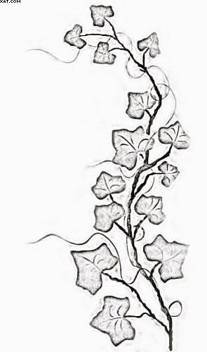 Vine Tattoos Designs And Ideas Page 38