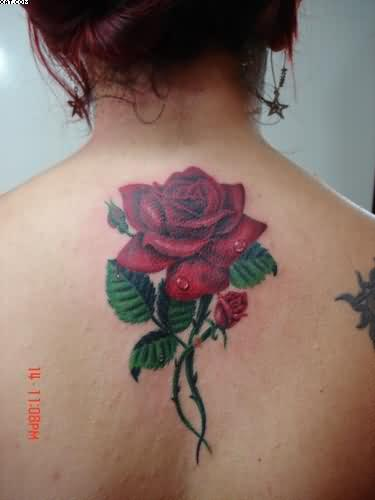Vine Tattoos Designs And Ideas  Page 21