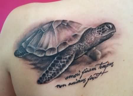 Amazing Realistic Turtle Tattoo On Back Shoulder