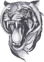 Angry Tiger Face Tattoo Sketch