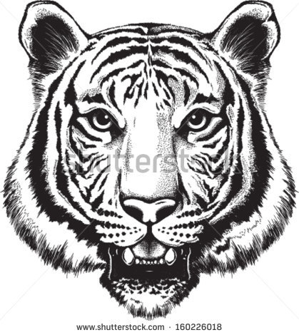 Black And White Tiger Face Galleryhipcom The Hippest