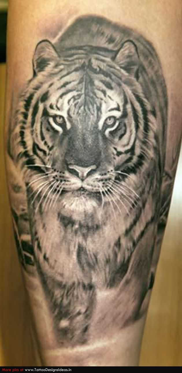 Grey Ink Realistic Tiger Tattoo