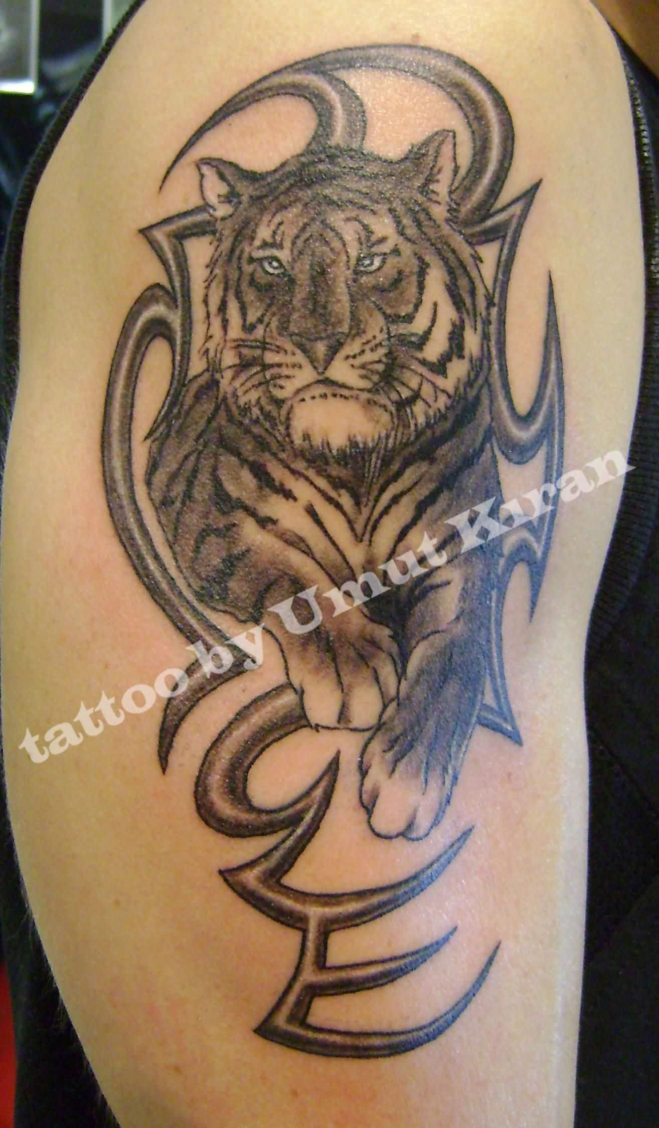 Tiger & Tribal Tattoos For Biceps
