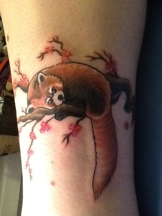 Brown Panda On Blossom Branch Tattoo On Arm