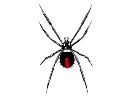 Latest Spider With Long Legs Tattoo Stencil