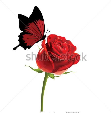 Butterfly On Red Rose Tattoo Design