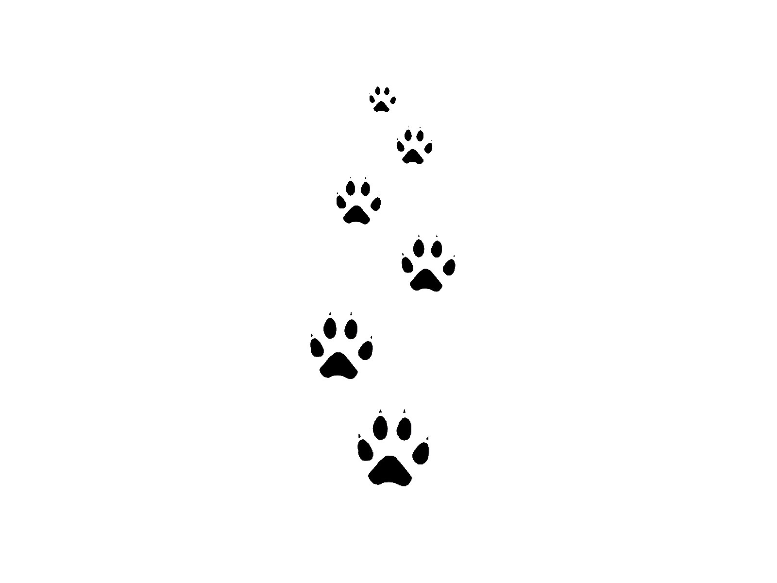 Cat Paw Tracks Tattoo Sample