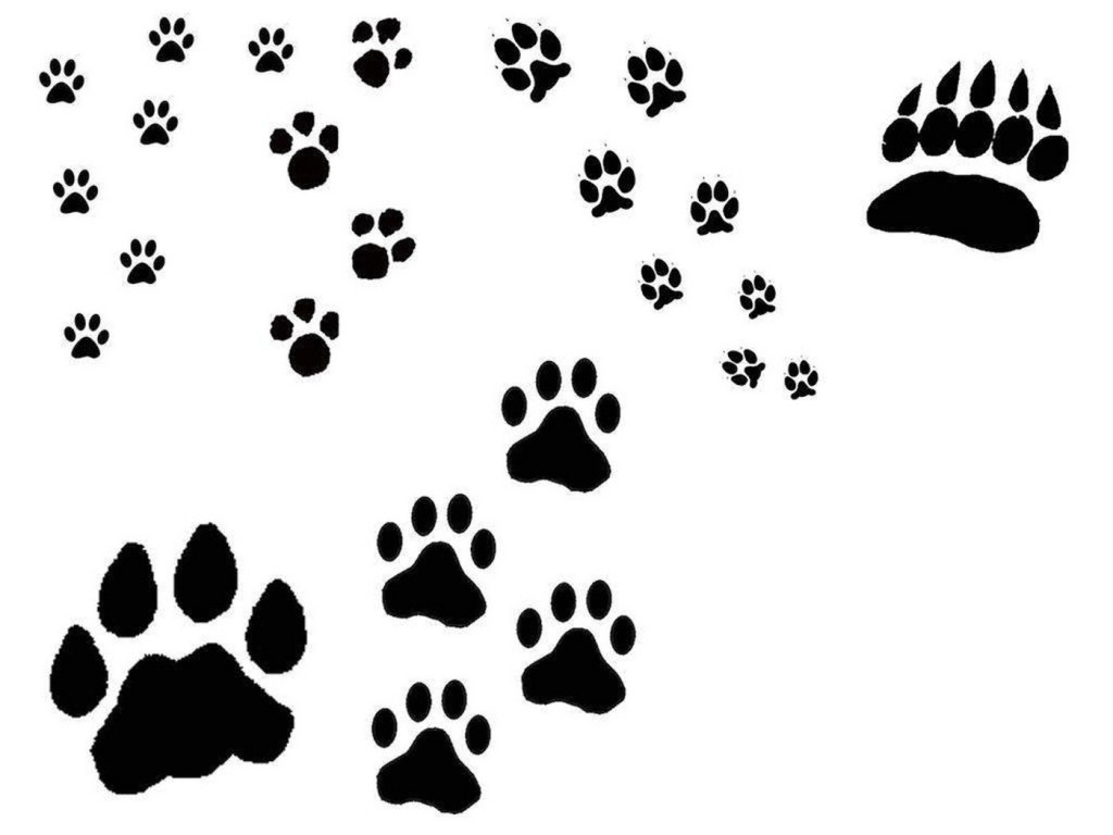 Cat Pawprint Tattoos