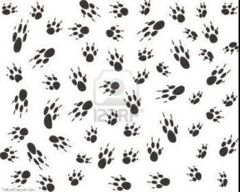 Dog Paw Print Tattoos Collection