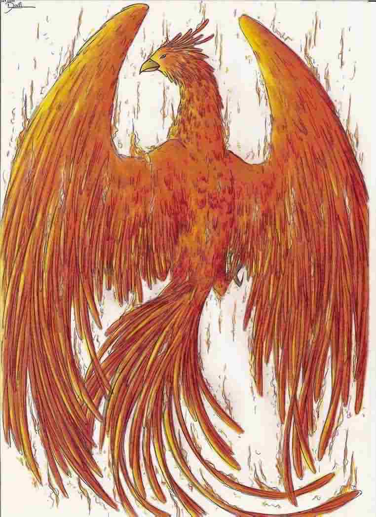 Fire Bird Phoenix Tattoo Design