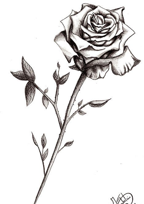 Free Grey Rose Tattoo Design