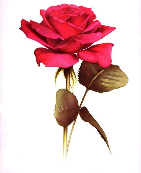 Free Red Rose Tattoo Design