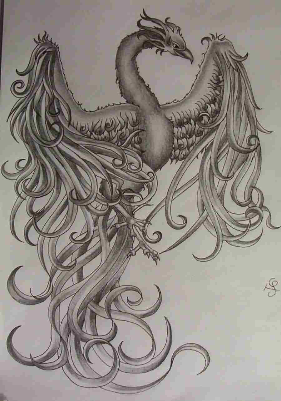 Girly Phoenix Tattoo Sketch