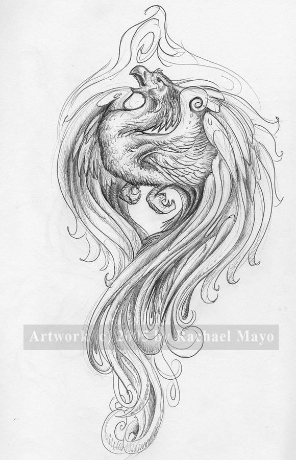 Grey Phoenix Tattoo Sketch