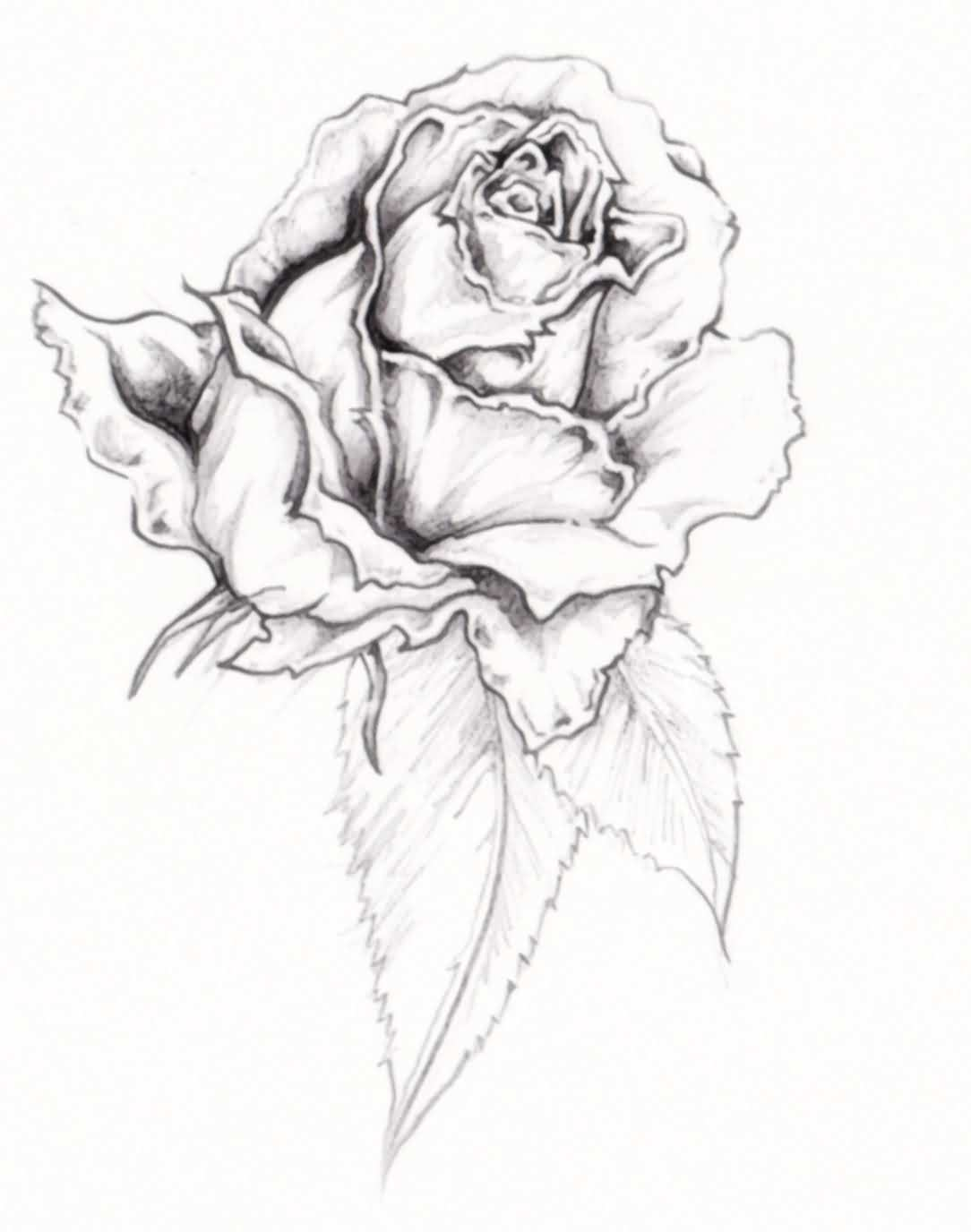 Grey Rose Tattoo Stencil
