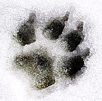 Kechara Paw Tattoo Design