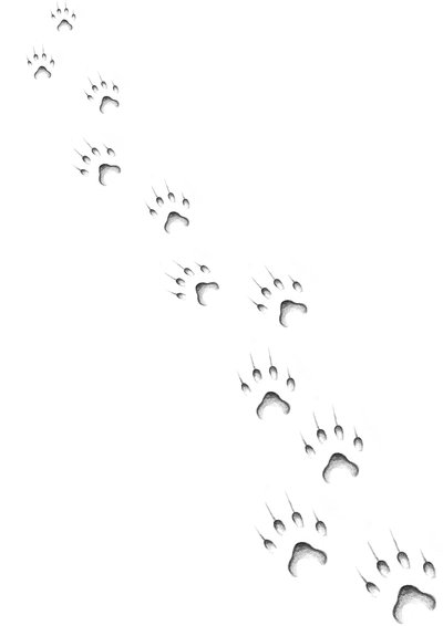 New Grey Cat Paw Prints Tattoo Designs