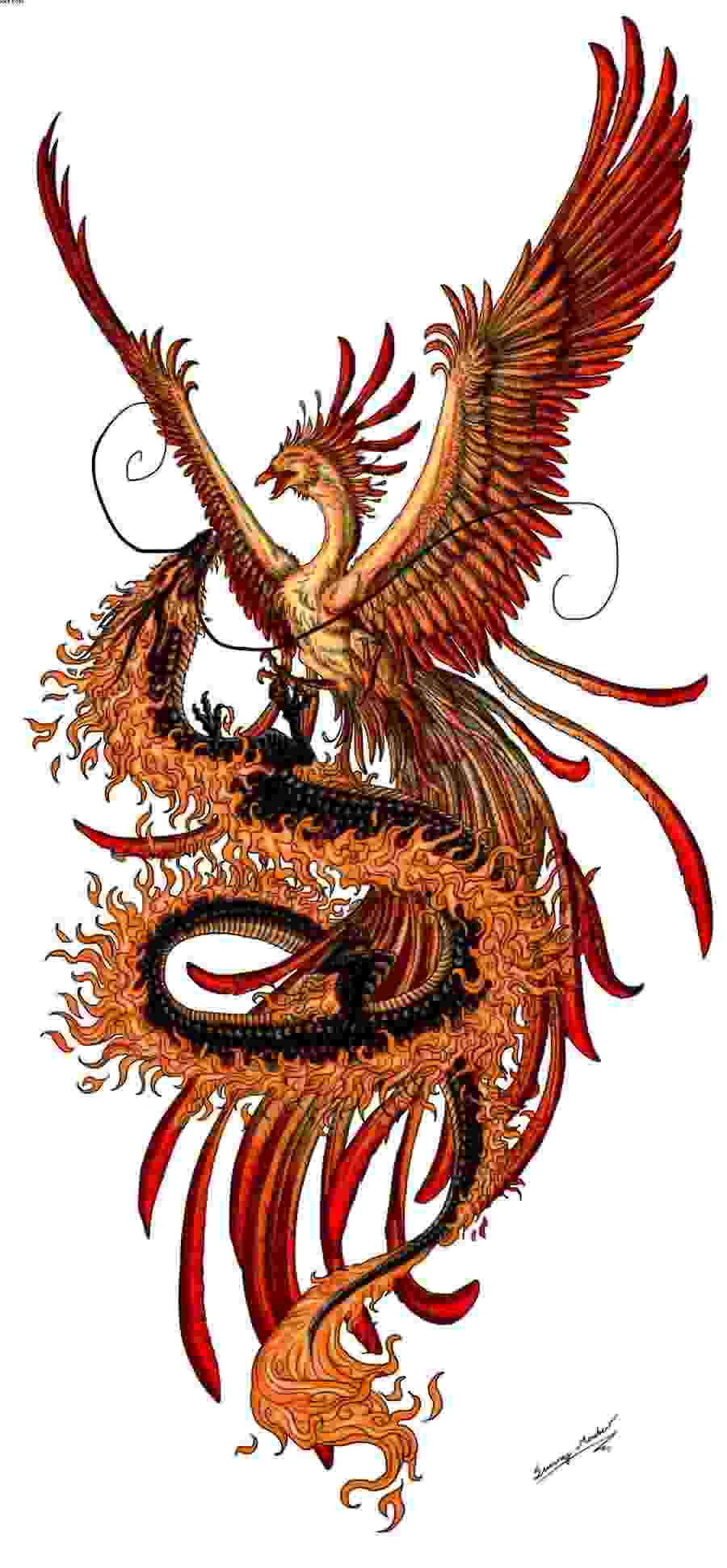 New Ink Phoenix And Dragon Tattoos Design