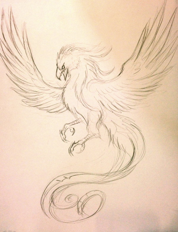 Once Again Phoenix Tattoo Sketch
