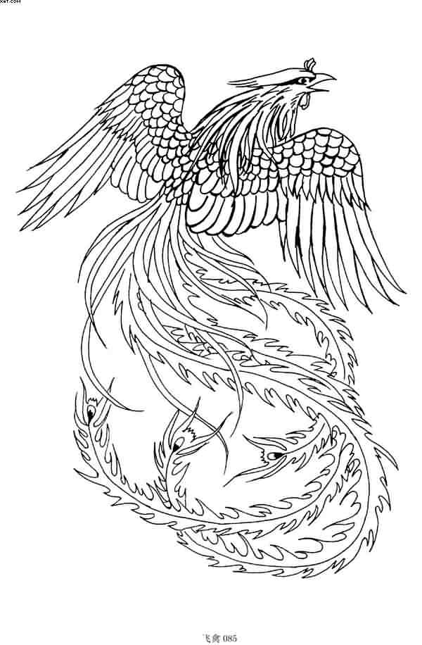 Phoenix Outlines Tattoo Sample