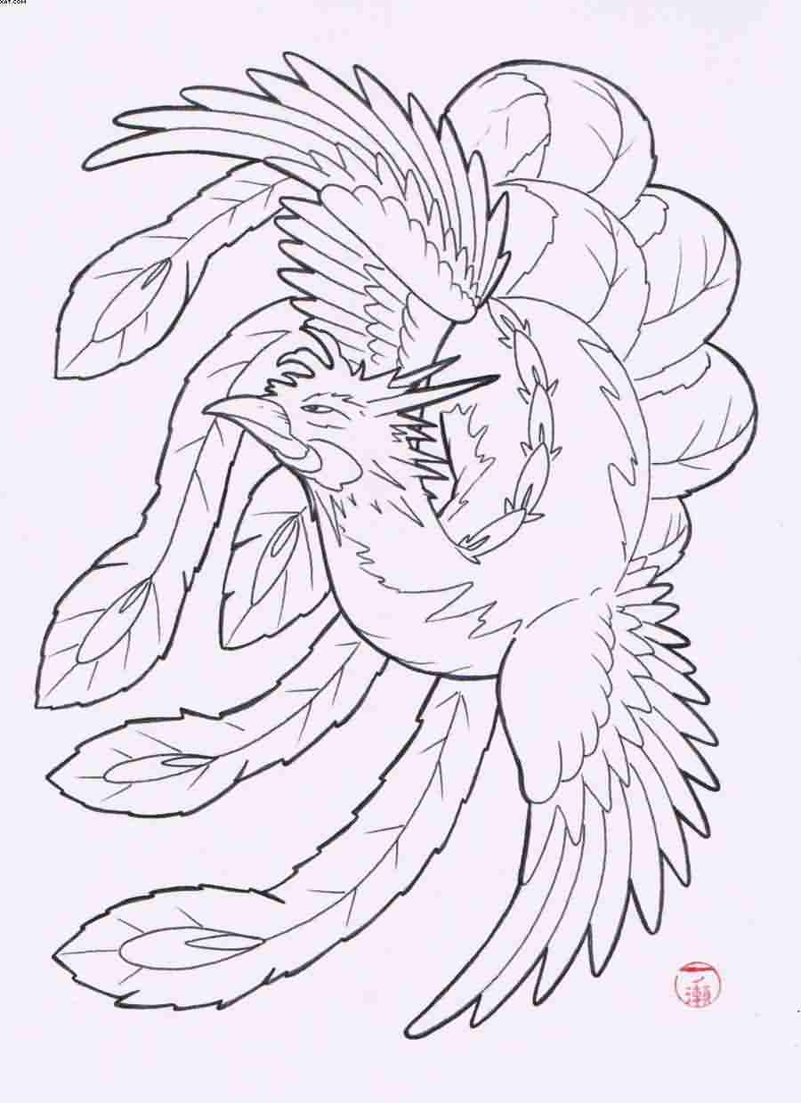Phoenix Tattoo Drawing Flash