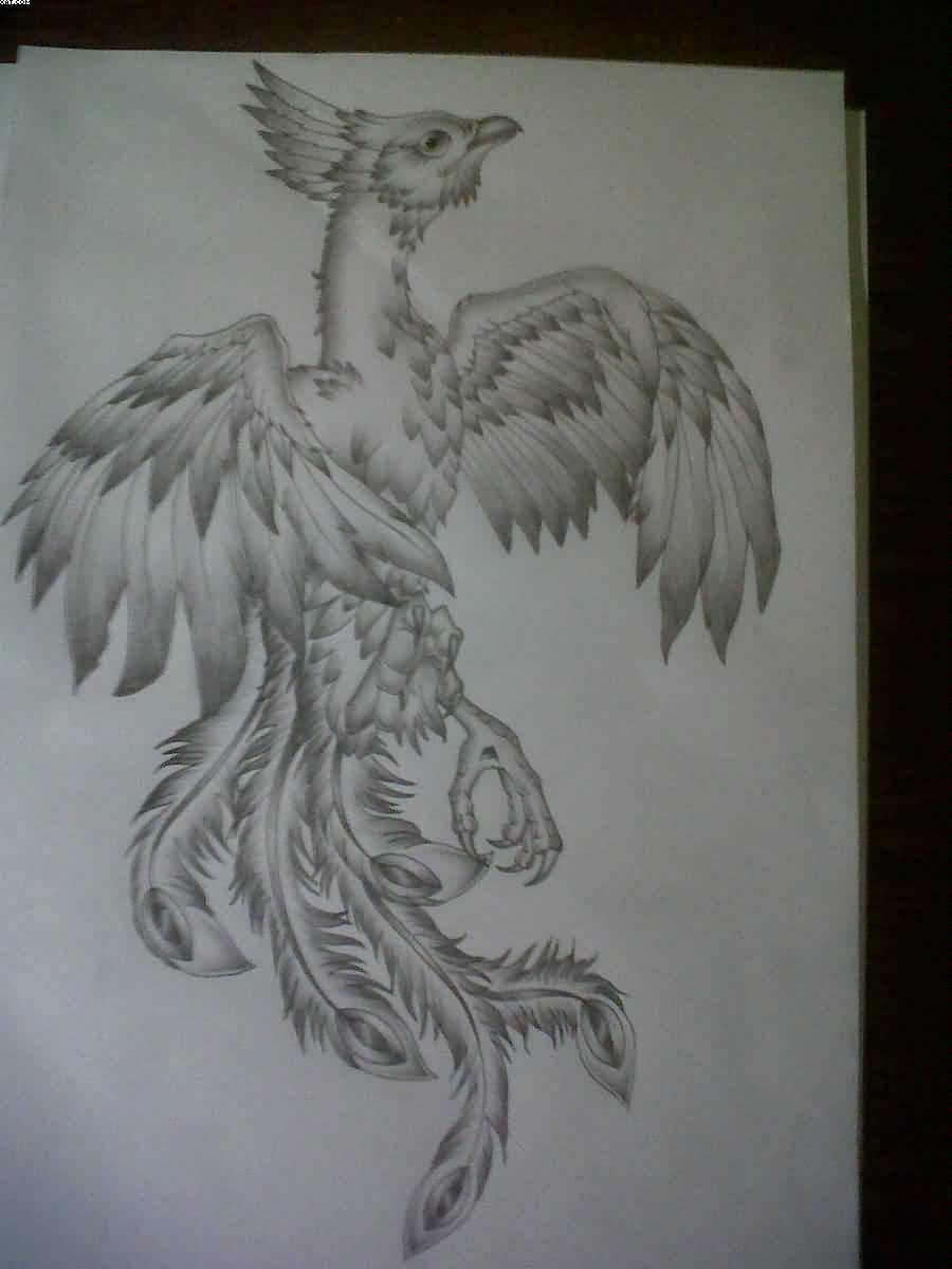 Phoenix Tattoo Drawing Page