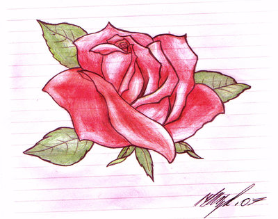 Red Rose Tattoo Sketch